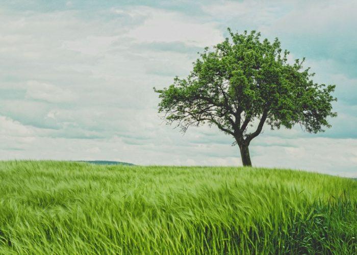 """""""Bäume pflanzen ist kinderleicht!"""""""