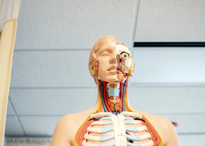 Die Chance auf ein neues Leben – Ein Organempfänger erzählt